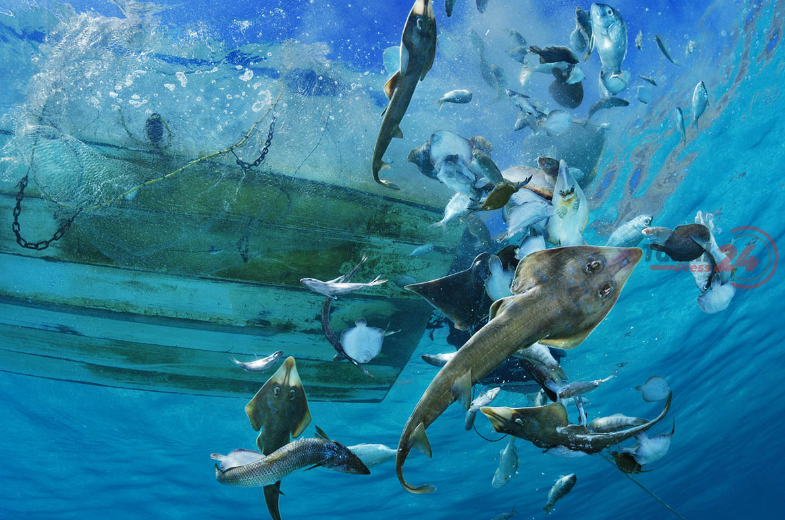 bycatch brian skerry